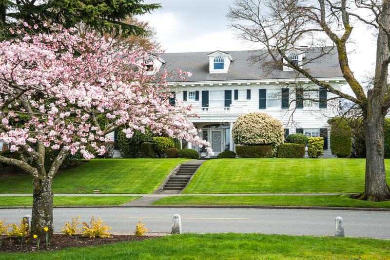 Historic Classic American Home. Colonial revival style (1910) stately luxury wooden house in American Northwest. Manicured landscaping. Spring. Cherry tree in royalty free stock photos
