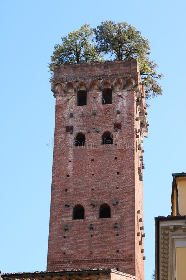 Guinigi Tower in Lucca, Italy. Historic Guinigi Tower in Lucca, northern Italy. It is a typical example of local Romanesque-Gothic architecture. The tower dates stock image