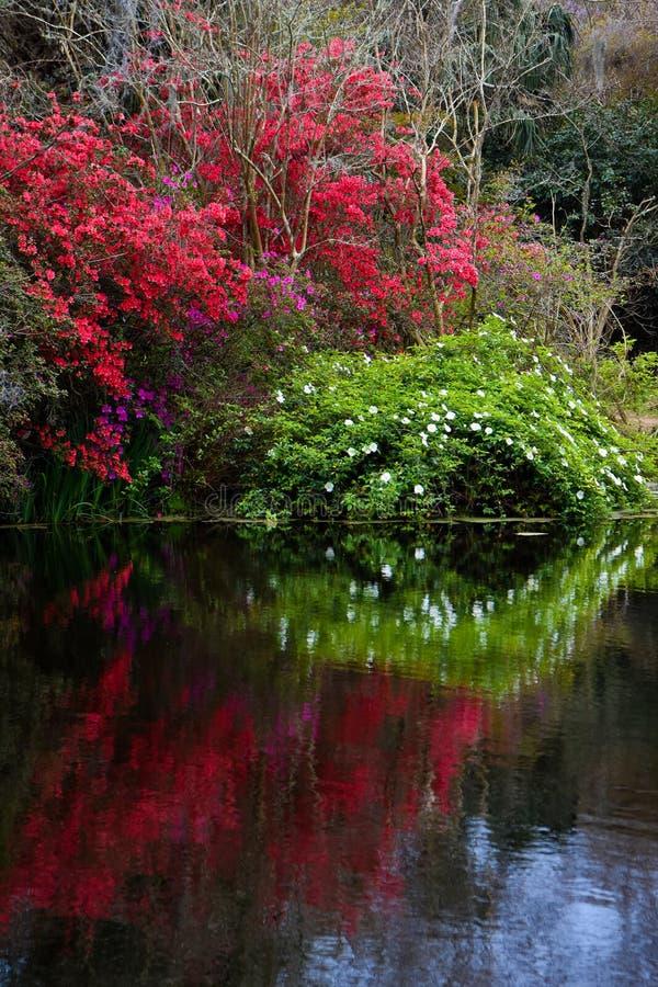 Historic Magnolia Plantations, Charleston, South Carolina ...