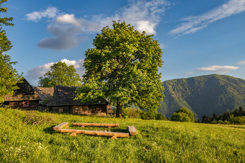 Historic wooden chalets on mountain meadow. And big chestnut tree under blue sky in evening light - settlement called Podsip - Little Fatra hills National Park stock photography