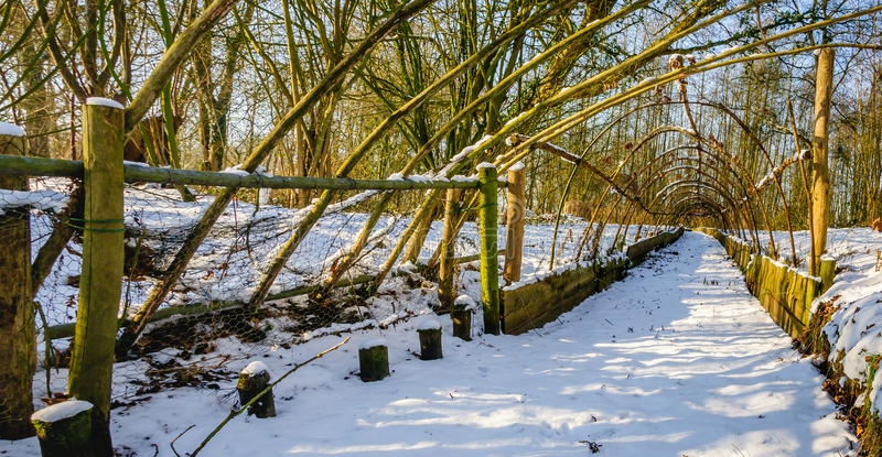 Historical Dutch duck decoy in wintertime. End of the trapping pipe of a restored historical Dutch duck decoy covered with a layer of snow. It's a sunny day in stock photo