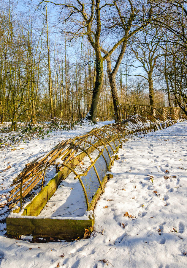 Historical Dutch duck decoy in wintertime. The last part of the trapping pipe of a restored historical Dutch duck decoy covered with a layer of snow. It's a royalty free stock photo