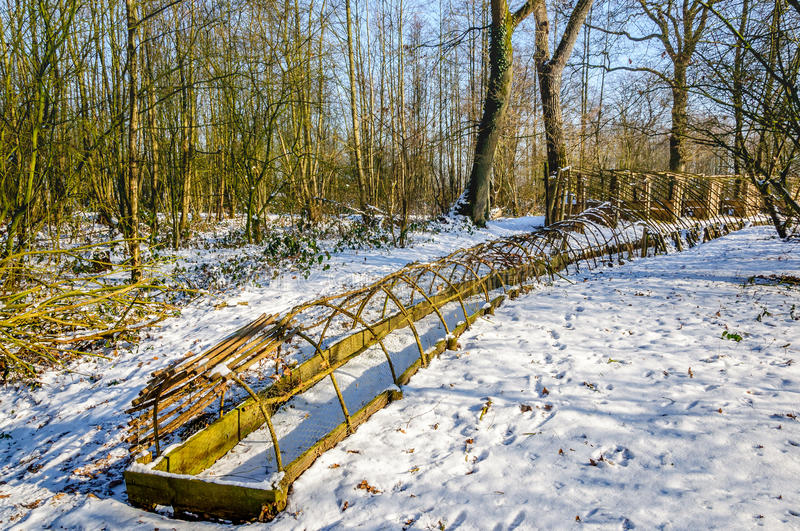 Historical Dutch duck decoy in wintertime. The last part of the trapping pipe of a restored historical Dutch duck decoy covered with a layer of snow. It's a stock photos