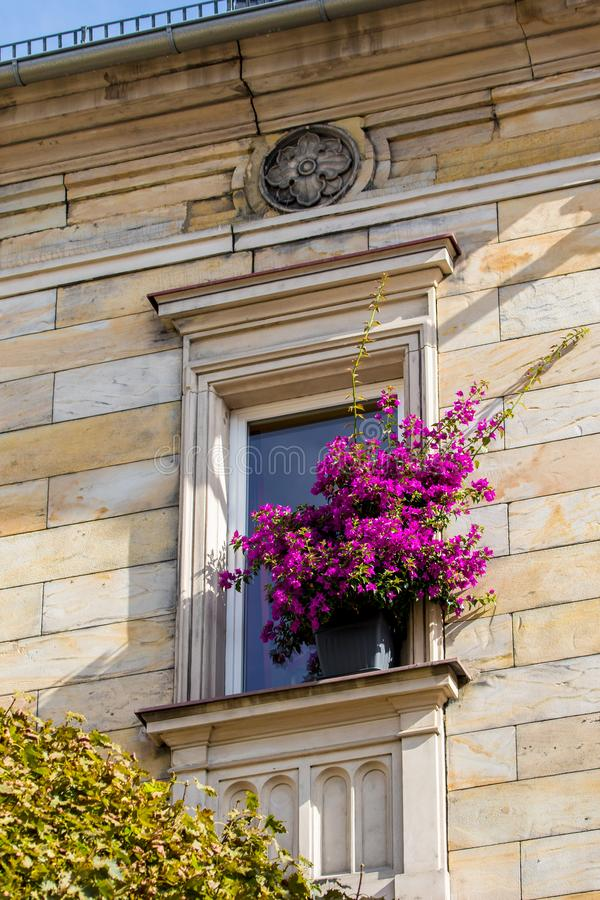 Historical facade with flowers - Bayreuth old town stock photography