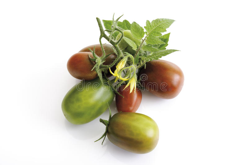 Historical tomatoes, Black Plum, close-up royalty free stock images
