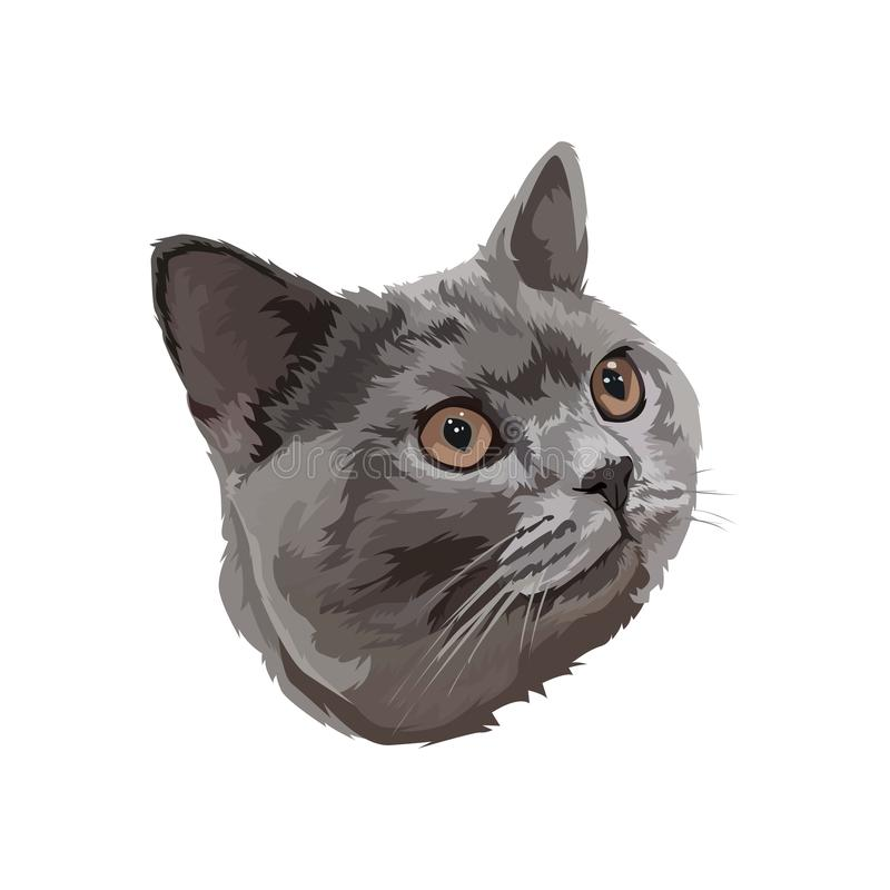 Historieta del gato persa libre illustration