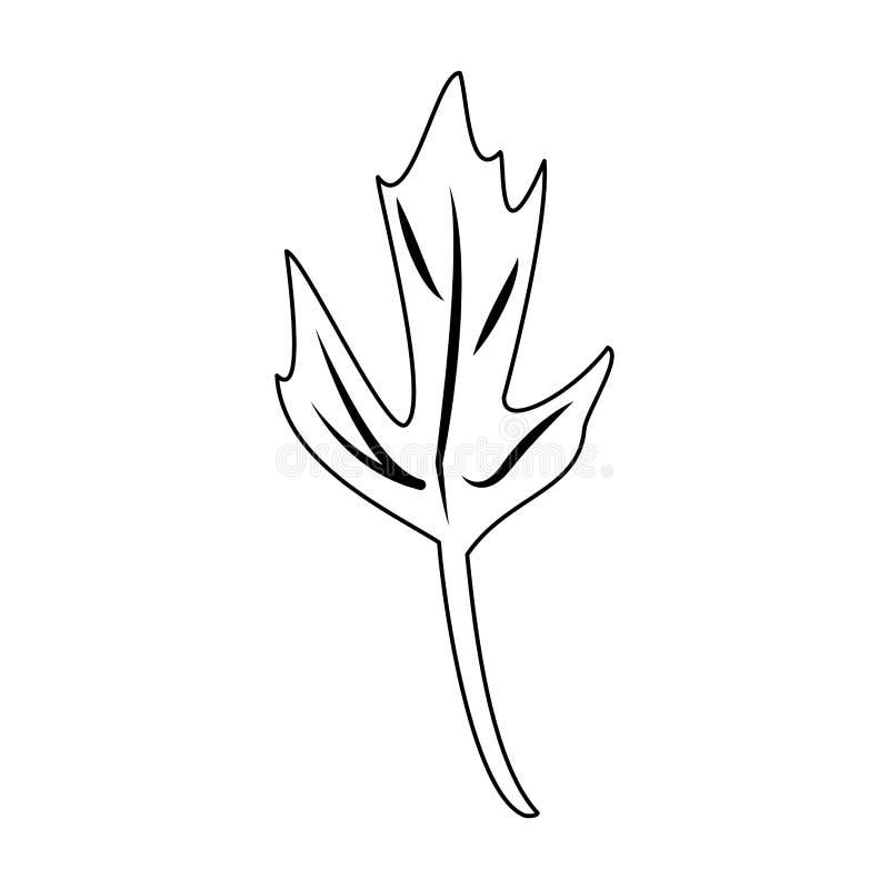 Historieta herbaria de la hoja del coriandro en blanco y negro ilustración del vector