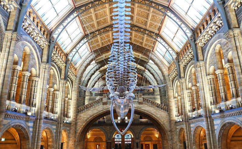 Historii naturalnej muzeum, Londyn, Zjednoczone Królestwo zdjęcia royalty free