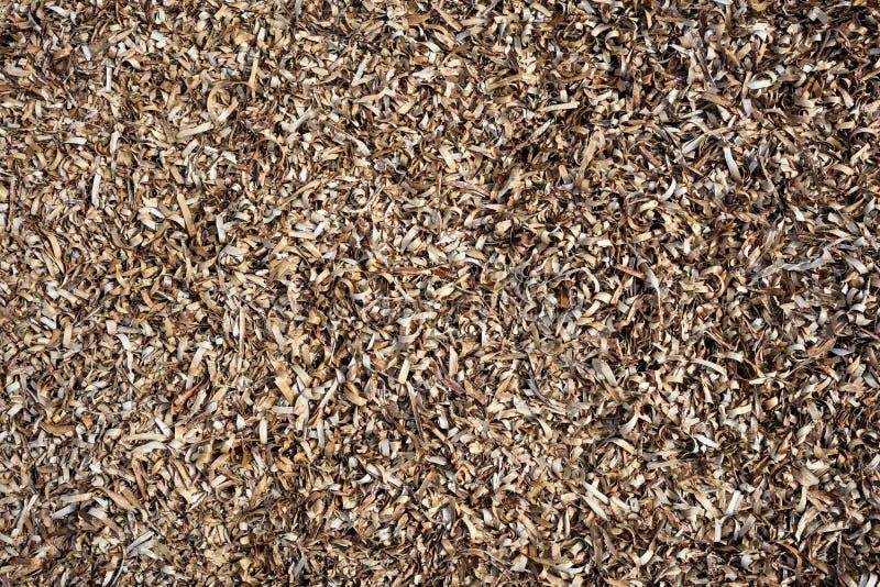 Historique complet sec d'algue, texture, vue de plan rapproché avec des détails photos stock