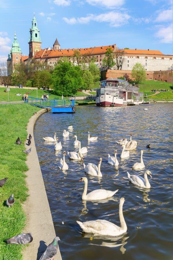 Historische Koninklijke Wawel-kasteelkathedraal stock afbeeldingen