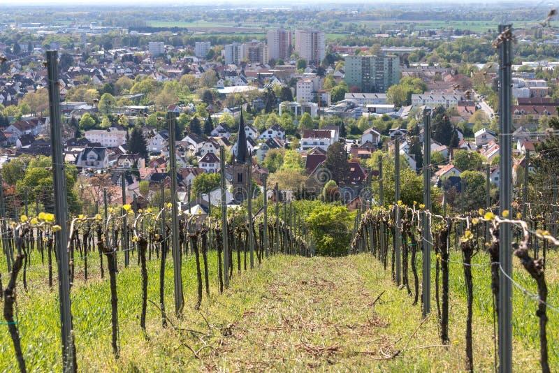 Historische stad bensheim in hesse Duitsland met gejankwijngaarden stock foto