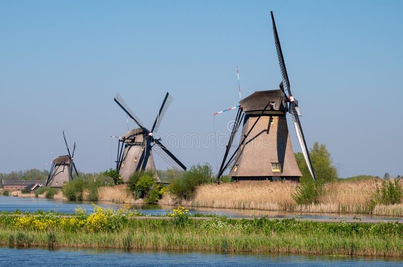 Historische Windm?hlen mit gelben Fr?hlingsblumen im Vordergrund, bei Kinderdijk, Holland lizenzfreie stockfotos