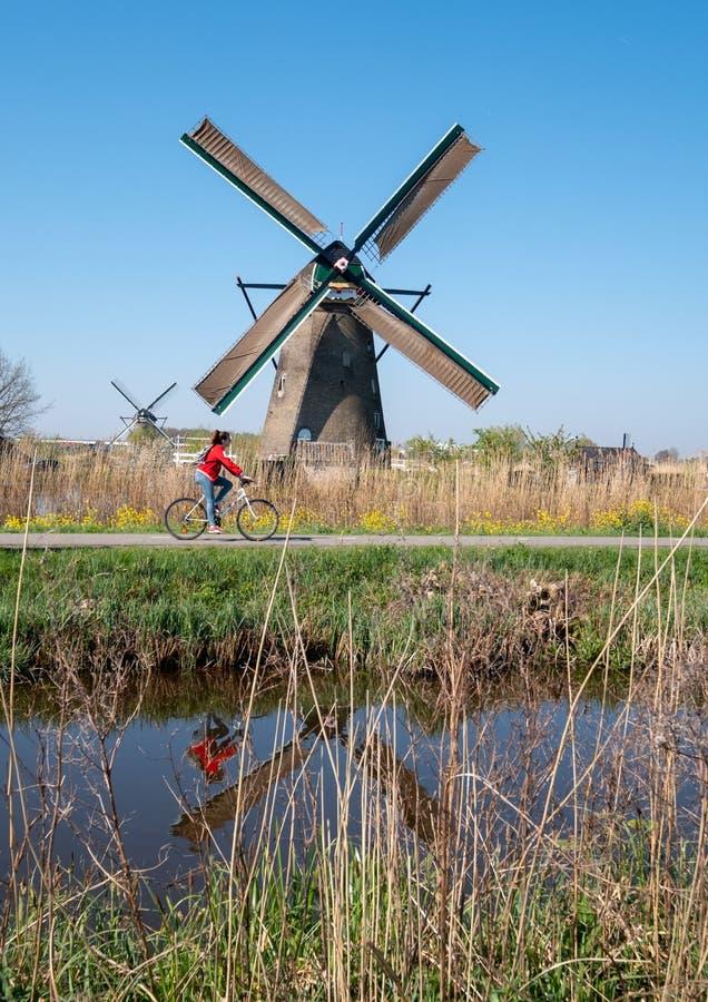 Historisk väderkvarn med cyklisten som framme cyklar, på Kinderdijk, Holland, Nederländerna, en UNESCOvärldsarv fotografering för bildbyråer
