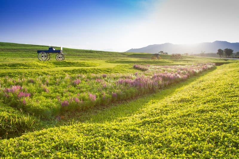 Historisk vagn för härligt landskap i blommafält royaltyfri foto