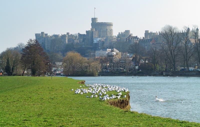 Historiskt Windsor slott och floden Thames royaltyfri bild