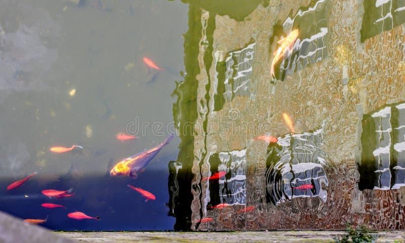 Historyczny budynek odbijał w kanale koi dopłynięcie pełno obraz royalty free