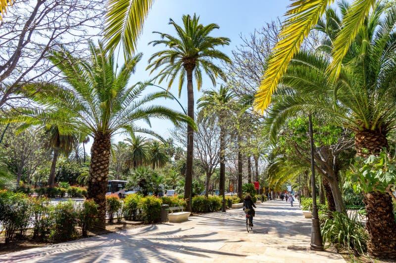 Hiszpania, Malaga - 04 04 2019: Chodniczek na Paseo Del Parque w Malaga, Hiszpania z drzewkami palmowymi z ludźmi zdjęcia royalty free