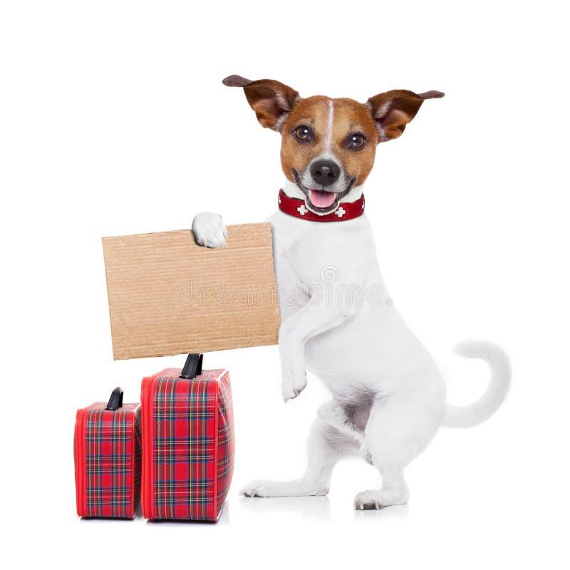 Hitchhiker σκυλί στοκ φωτογραφία με δικαίωμα ελεύθερης χρήσης