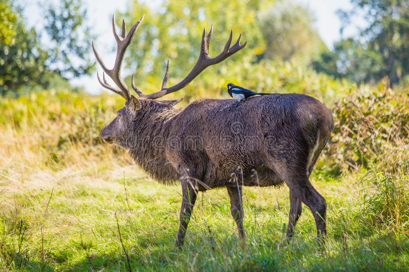 Hitching a ride in the forest royalty free stock photo