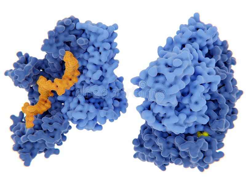 HIV-1 αντίστροφο transcriptase ελεύθερη απεικόνιση δικαιώματος