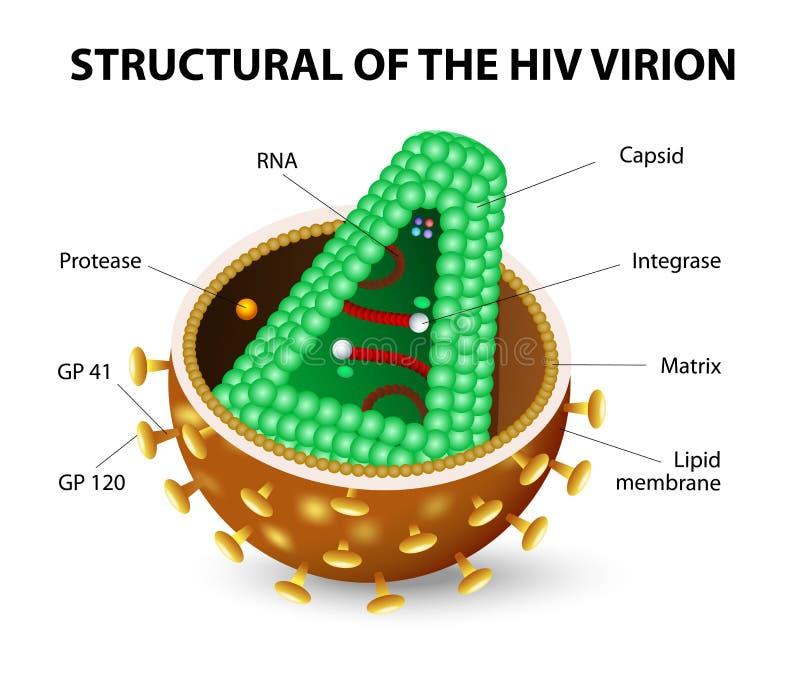 HIV Virion vektor illustrationer