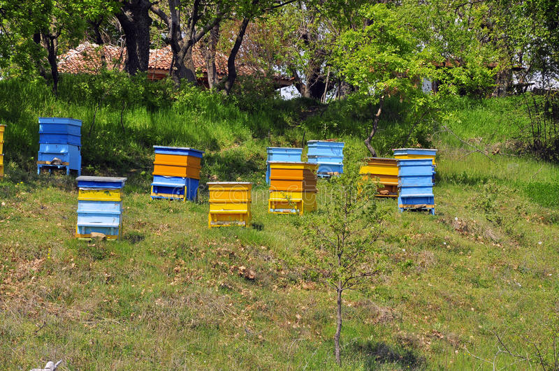 Hive. Bee hive on sunny hill stock images