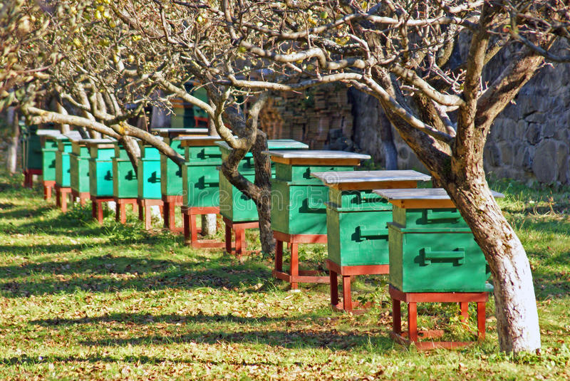 Hive of bees. In acacia orchard stock photo