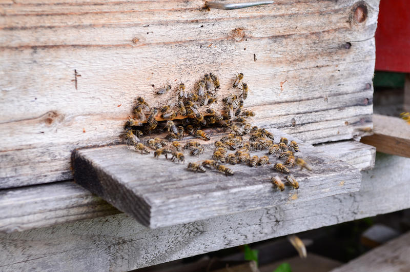 Download Hive with bees stock photo. Image of bees, countryside - 41349600