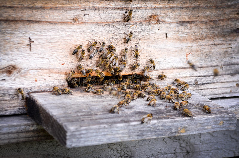 Hive With Bees Stock Photo