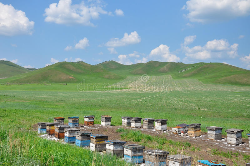 Download Hive in the grassland stock photo. Image of blue, busy - 26440100