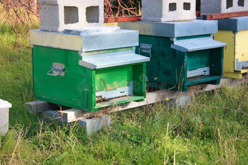 hive hives diversas fileiras das casas para abelhas de cores diferentes foto de stock royalty free