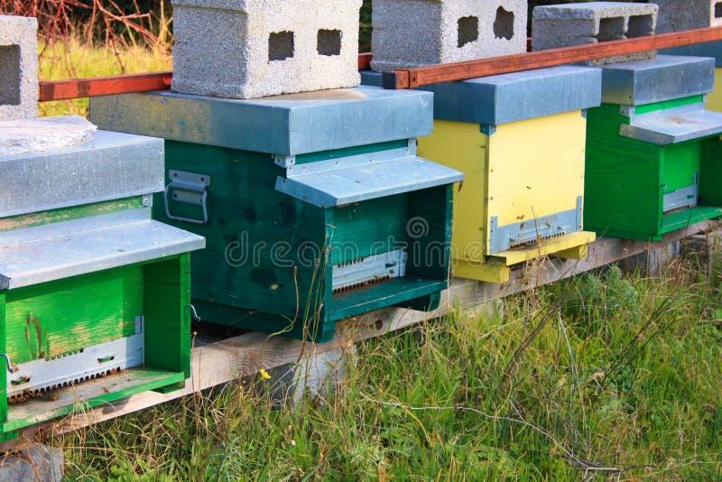 hive hives diversas fileiras das casas para abelhas de cores diferentes fotografia de stock