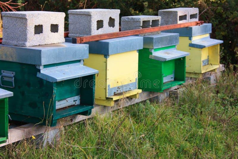 hive hives diversas fileiras das casas para abelhas de cores diferentes imagem de stock