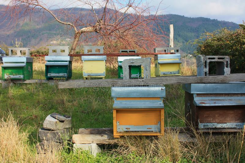 hive hives diversas fileiras das casas para abelhas de cores diferentes fotografia de stock royalty free