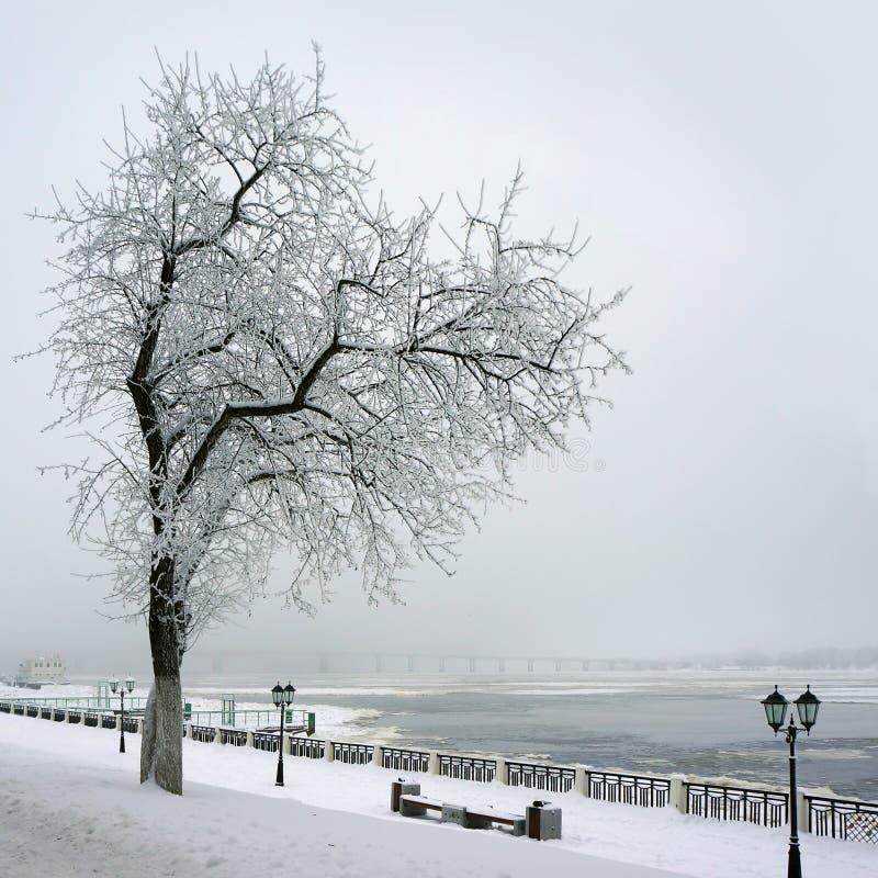 Hiver, arbre isolé sur la côte de la rivière image stock