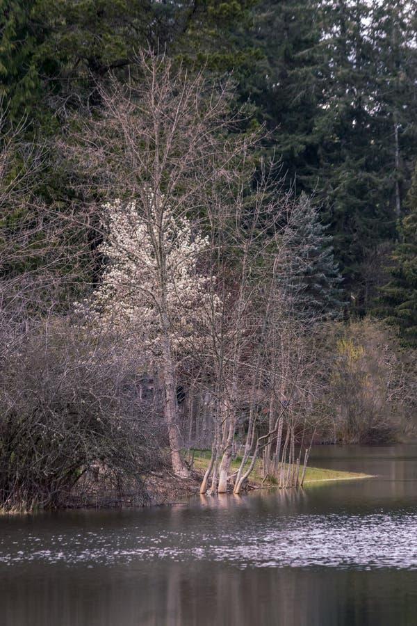 Hiver au bord du lac avec des arbres photographie stock libre de droits