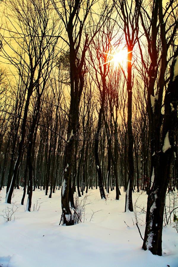 Hiver dans la forêt images stock