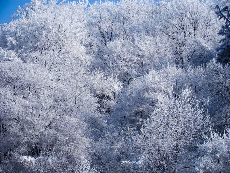 Hiver dans la montagne de Golo Burdo, Bulgarie image stock