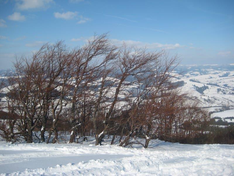 Hiver dans les montagnes carpathiennes image libre de droits