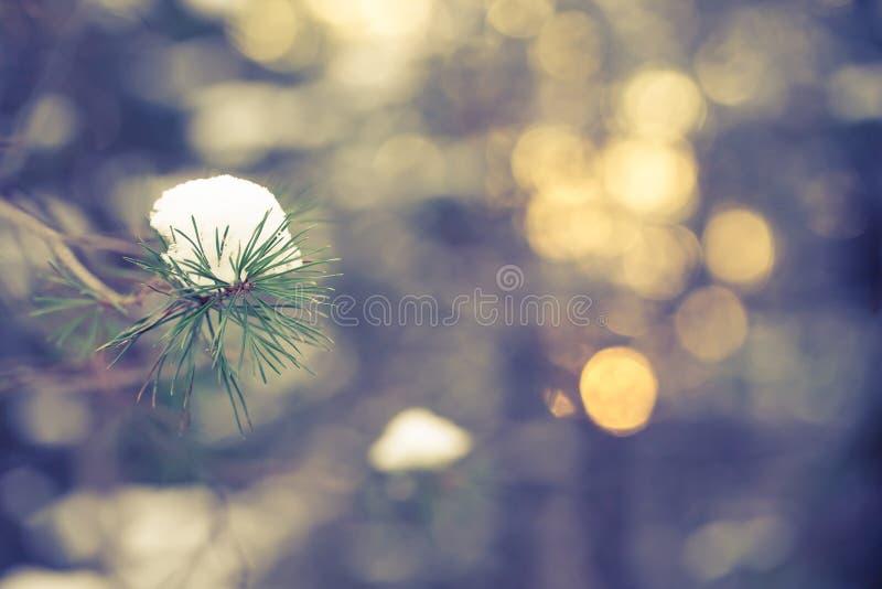 Hiver de Milou à l'arrière-plan de Blured de forêt de pin toned image stock