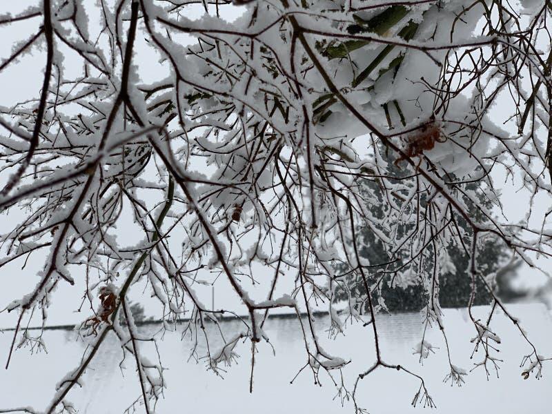 Hiver de tempête de neige Seattle 2019 Washington photographie stock libre de droits