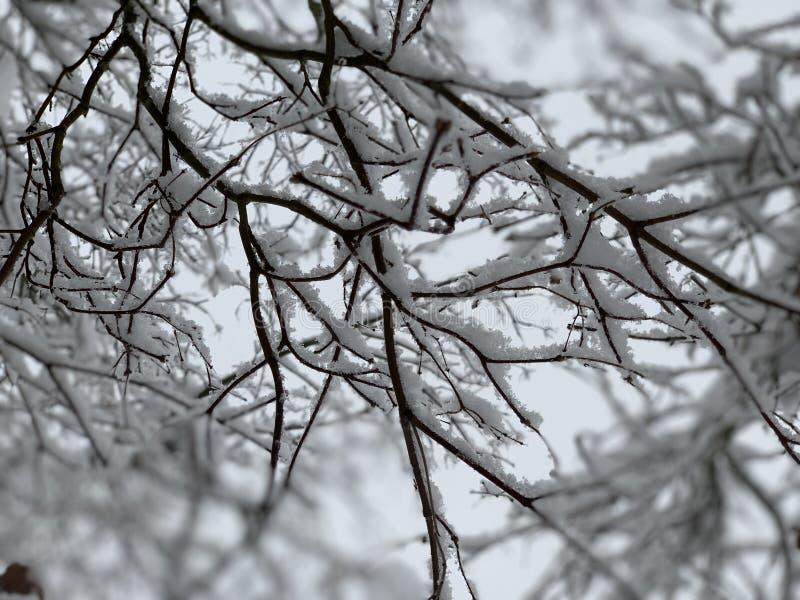 Hiver de tempête de neige Seattle 2019 Washington images libres de droits