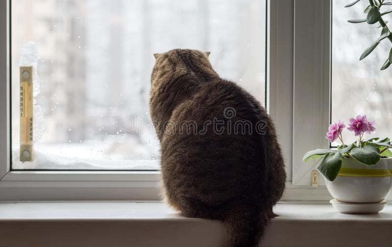 Hiver en dehors de la fenêtre Le chat se repose sur le rebord de fenêtre par temps d'hiver images libres de droits