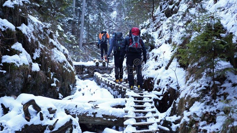 Hiver en gorge de Sucha Bela, parc national de raj de Slovensky, Slovaquie image libre de droits