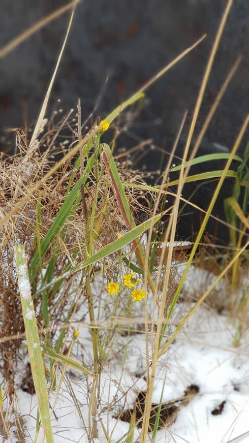 Hiver et fleurs photo libre de droits