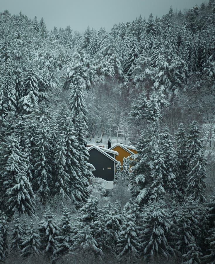 Hiver et forêt neigeuse avec les maisons en bois photographie stock libre de droits