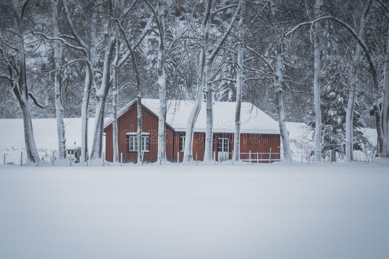 Hiver et for?t neigeuse avec les maisons en bois photos stock