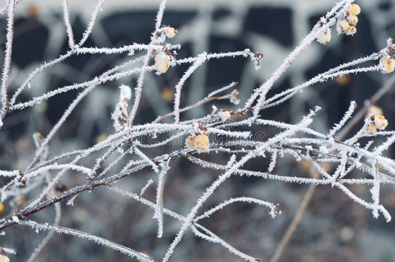 Hiver FrostClose d'une branche d'arbre gelée image stock