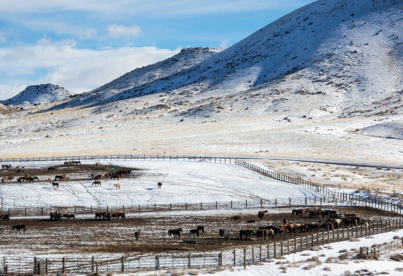 Hiver, installation d'adoption de cheval sauvage de BLM photographie stock libre de droits