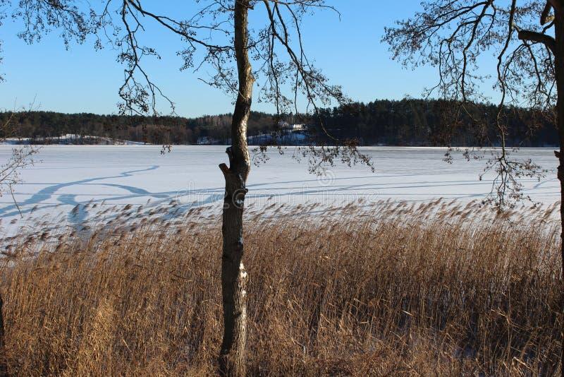 Hiver, lac en hiver, neige, forêt en hiver, arbres dans la neige image libre de droits